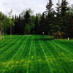 straight lawn lines